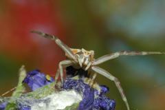 Divers insectes photographiés en deux ans 2006-05-24_Insectes